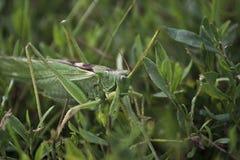 Groot insect. Royalty-vrije Stock Afbeeldingen