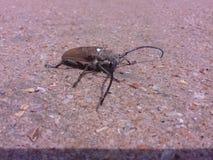 Groot insect op zand Stock Afbeeldingen