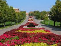 Groot kleurrijk bloembed stock afbeelding