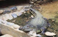 Groot krokodilclose-up royalty-vrije stock afbeelding