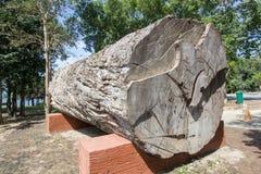 Groot mooi logboek van Afzelia-xylocarpamakha op Nationaal het Parkkantoor van Kaeng Krachan, Phetchaburi-Provincie, Thailand stock fotografie