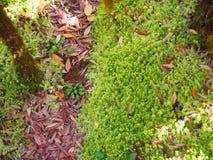Groot mos royalty-vrije stock afbeeldingen