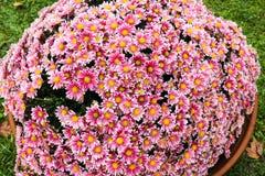 Groot pottenhoogtepunt van kleurrijke bloemen stock foto
