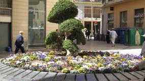 Groot rond viooltjebloembed met boombeeldhouwwerk royalty-vrije stock foto's
