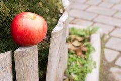 Groot rood Apple in de werf dichtbij de boom stock afbeeldingen