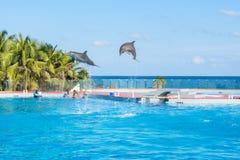 Groot Sirenis-Hotel & Kuuroord, Akumal, Riviera Maya, Mexico, 24 DECEMBER, 2017 - Twee het springen dolfijnen De dolfijn toont in Royalty-vrije Stock Foto's