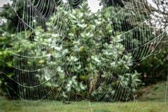 Groot spinneweb in tuin Royalty-vrije Stock Fotografie