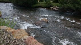 Groot Thompson River in Estes Park, Colorado stock videobeelden