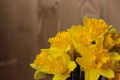 Groot-tot een kom gevormde Gele narcis Royalty-vrije Stock Foto's