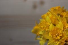 Groot-tot een kom gevormde Gele narcis Stock Foto's