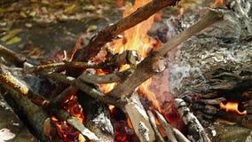 Groot vlammenclose-up De oude droge takken en de bladen van document branden op de brand stock videobeelden