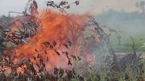 Groot warm en helder vuur en rook van brand en vuur in de middag stock footage