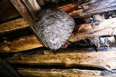 Groot wespnest in de zolder van buitenhuis dichte omhooggaand royalty-vrije stock foto
