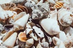 Groot zeeschelpenclose-up Witte verspreid shells Het zonlicht valt op witte mooie shells royalty-vrije stock afbeelding