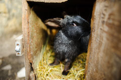 Groot zwart konijn in een kooi Royalty-vrije Stock Afbeelding