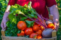 Grootmoeder die een mandhoogtepunt met verse groenten houden stock fotografie