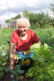 Grootmoeder die salade toont Stock Foto