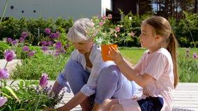 Grootmoeder en meisje die bloemen planten bij tuin stock video