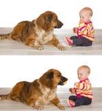 Grootmoedige baby die koekje met hond deelt stock afbeeldingen
