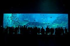 Grootste aquarium in de wereld Stock Fotografie