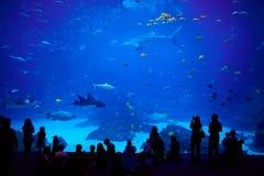 Grootste aquarium in de wereld. Atlanta, Georgië. Royalty-vrije Stock Foto