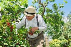 Grootvader in de tuin Stock Afbeelding