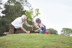 Grootvader en kind die boom in de samenhorigheid van de parkfamilie planten stock afbeeldingen