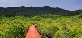 Grooveman skog, Thailand Arkivfoton
