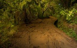 Gropig bana på levada för madeira` s Royaltyfri Foto