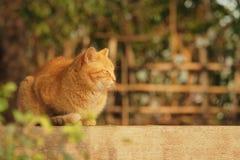 Gros chat Photographie stock libre de droits