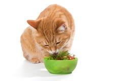 Gros chat et régime Photo libre de droits