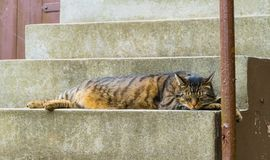 Gros chat s'étendant sur des escaliers images stock