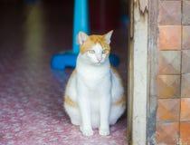 Gros chat seul se reposant photos stock