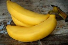 Gros Michel banan arkivbilder
