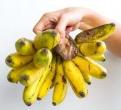 Gros Michel Bananas disponibile Fotografia Stock
