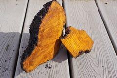 Gros morceaux de champignon de Chaga séchant sur le porche photos libres de droits