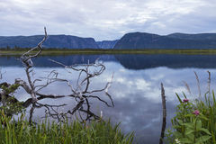 Gros Morne Pond Reflections. The cliffs of Western Brook Pond and silver driftwood are reflected in a pond at dusk in Gros Morne National Park in Newfoundland Stock Images
