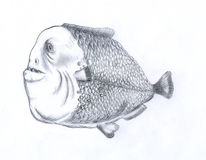 Gros poissons de piranha illustration stock