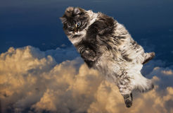 Gros vol drôle de chat dans le ciel Images libres de droits