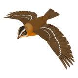 Grosbeak Bird Stock Image