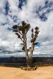 Grose Valley in Blue Mountains Australia royalty free stock photo