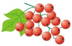 Groseille rouge Photo libre de droits