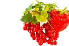 Groseille rouge avec la fraise d'isolement sur le fond blanc, fraise naturelle rouge, nourriture saine Images stock