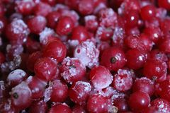Groseille rouge congelée Images libres de droits