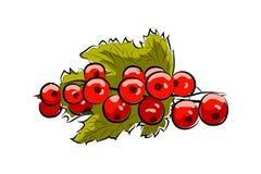 Groseille rouge de branche photographie stock libre de droits