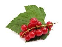groseille rouge de rouge de corinthe Photo stock