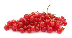 groseille rouge de rouge de corinthe Photographie stock libre de droits