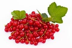 Groseille rouge - groseille rouge Image libre de droits