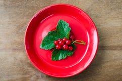 Groseille rouge organique mûre fraîche dans le plat Images libres de droits