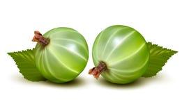 Groseilles à maquereau vertes avec des feuilles. Image libre de droits